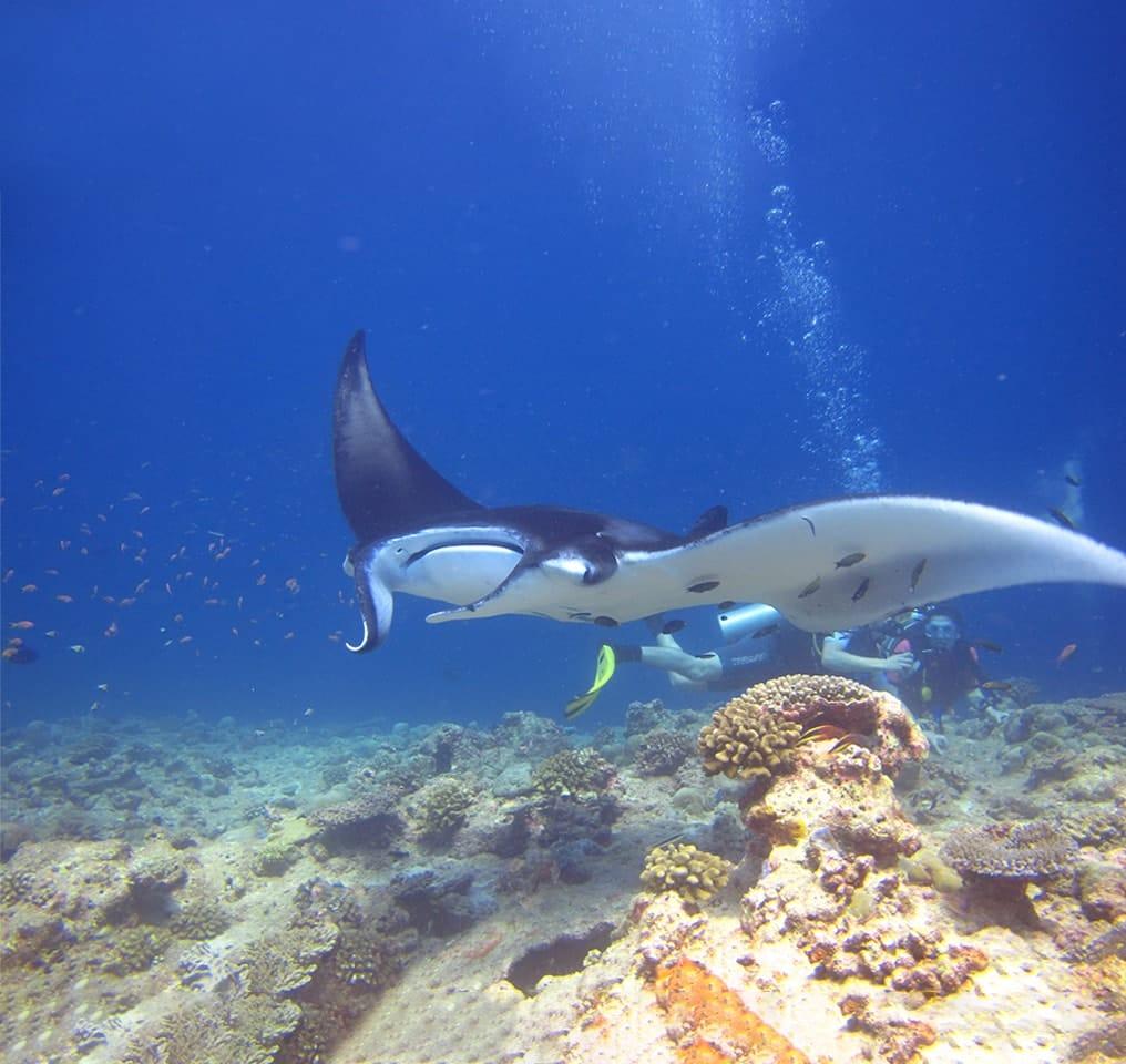 Diving at Fushifaru Maldives