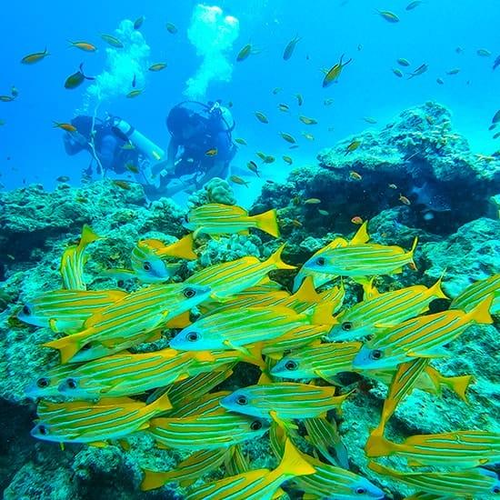 Fushifaru Reef
