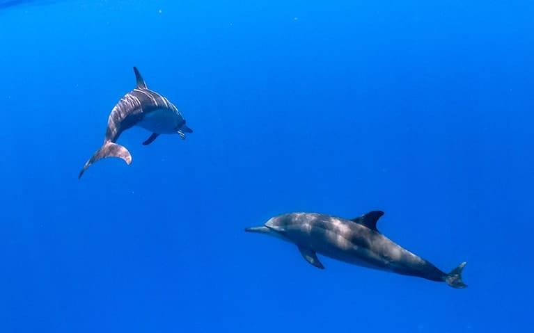 Dolphin Quest at Fushifaru Maldives