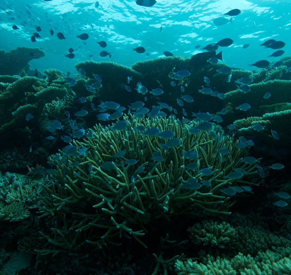 Reefs around the island of Fushifaru