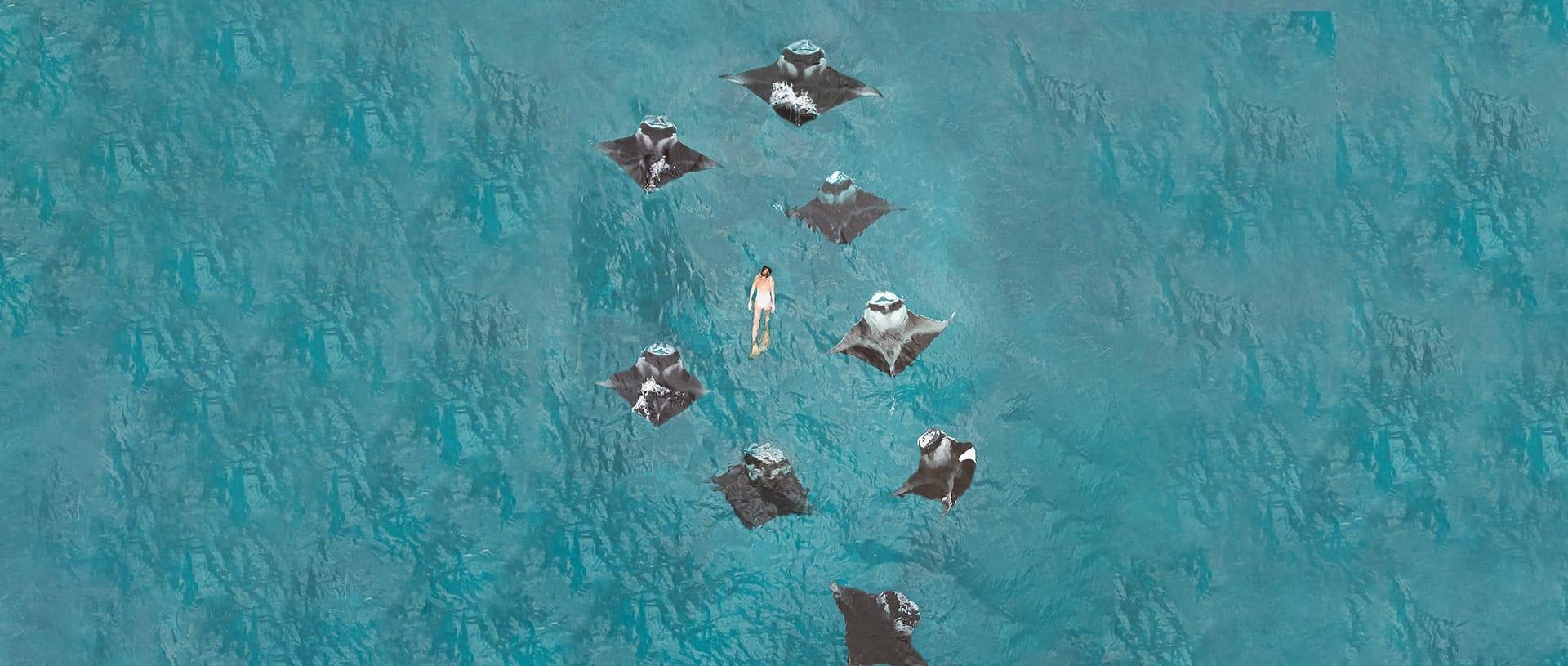 World-Class Diving at Fushifaru Maldives
