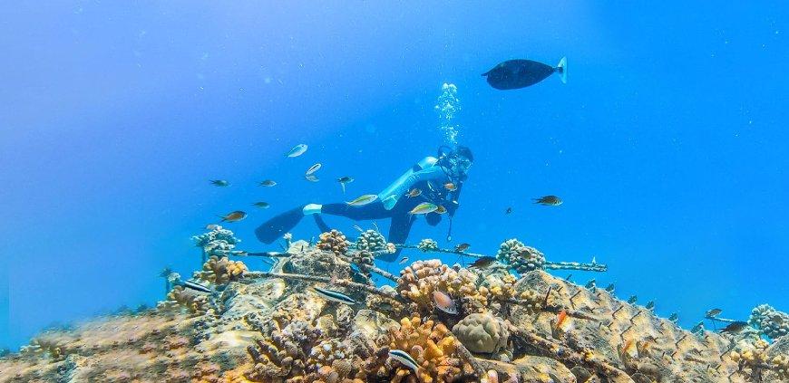 Coral restoration snorkeling tour
