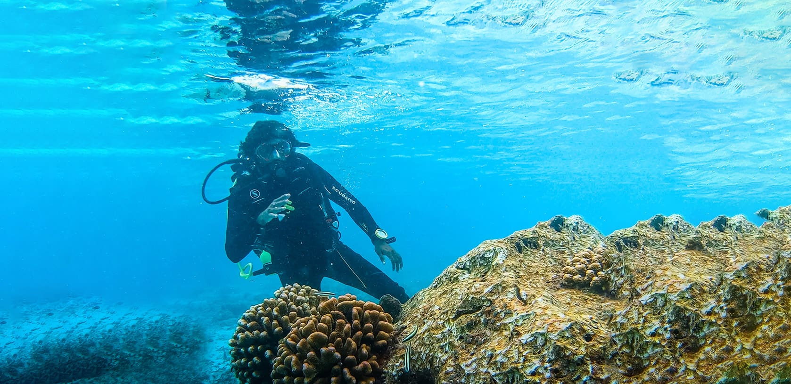 Divers on a coral restoration snorkeling tour
