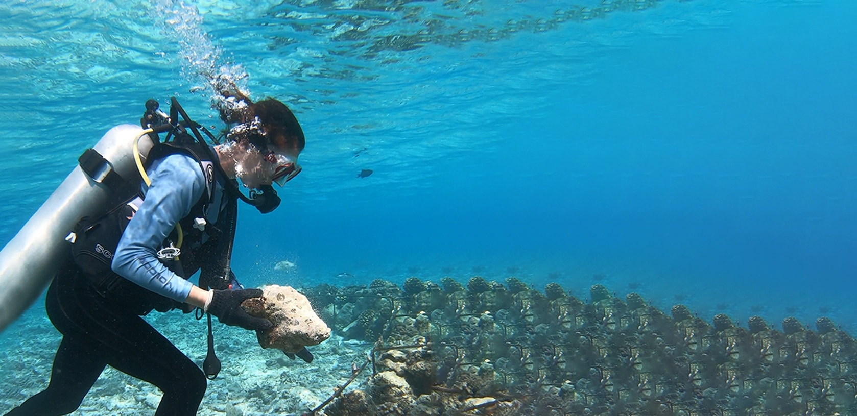 Diver planting coral fragments in frame