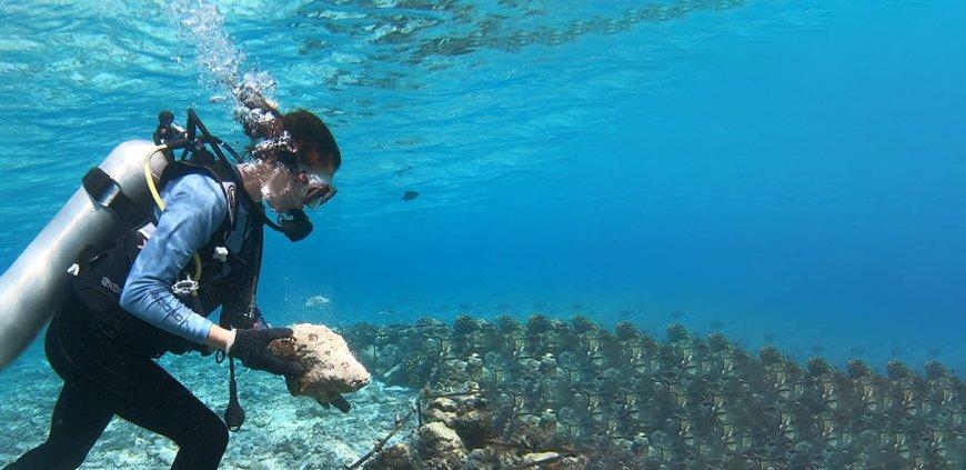 Diver planting coral fragments in frame