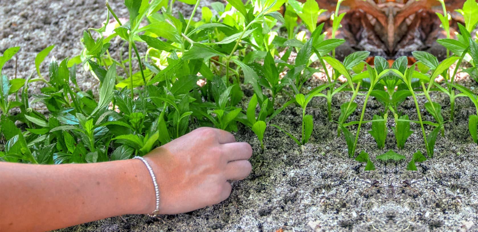 """Fushifaru team planting planting trees for the """"Plant Your Own Tree' Program""""."""